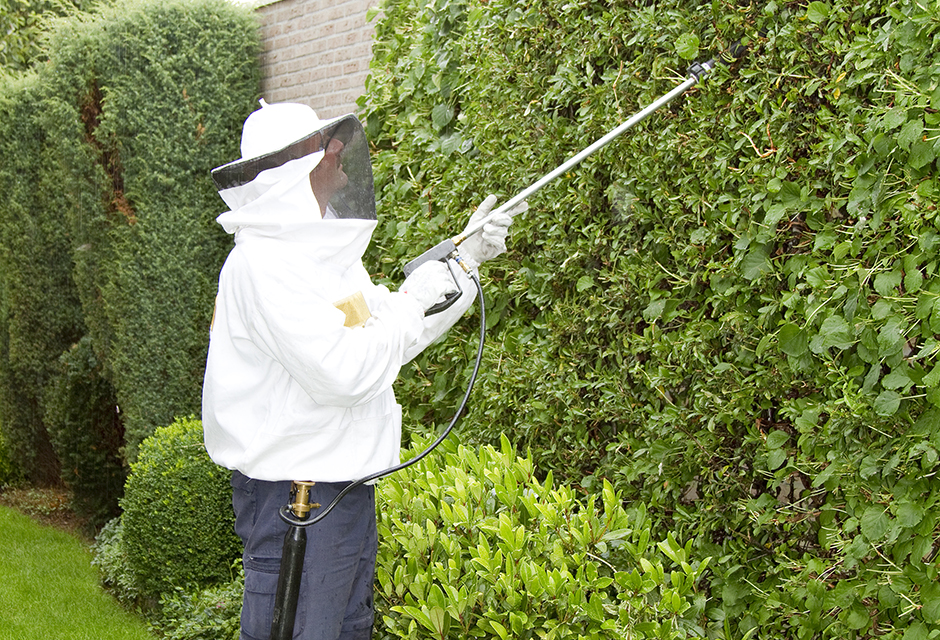 exterminating pests in Edmonton