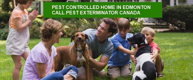 PestFreeHome-Edmonton